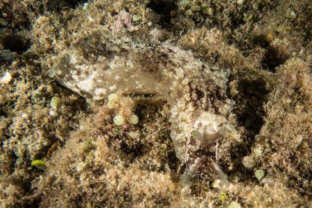 Nudibranch -Raja Ampat- 20141016 195816 UW 05460