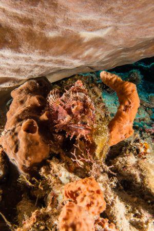 Scorpionfish -Raja Ampat- 20141018 090910 UW 05919